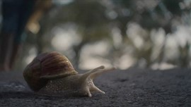 Samsung, Surf 'The Snail'